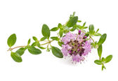 Thyme flowers — Stock Photo