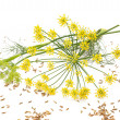 Wild fennel — Stock Photo #36918767