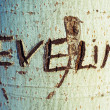 Stock Photo: Personal names engraved on the bark of a tree