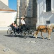 Sightseeing horse-drawn carriage in Bratislava, Slovakia — Stock Photo