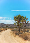Joshua Tree National Park, California — Stock Photo