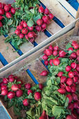 Radishes at Berlin farmer's market — Stock Photo