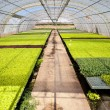 Greenhouse — Stock Photo #12099260