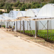 Greenhouses for growing — Stock Photo #12141951