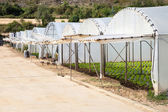 Greenhouses for growing — Stock Photo