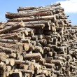 Wood piled — Stock Photo #12625641