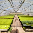 Industrial plants cultivation — Stock Photo #13310306