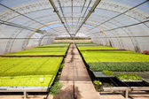 Industrial plants cultivation — Stock Photo
