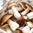 Eatable fungi — Stock Photo