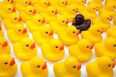 Yellow ducks — Stock Photo