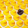 Stock Photo: Gum ducks yellow