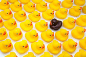 Gum ducks yellow — Stock Photo