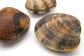 Three fresh clams — Stock Photo