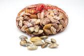 Small clams — Stock Photo