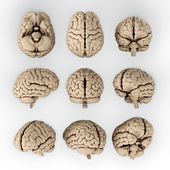 Ludzki mózg — Zdjęcie stockowe