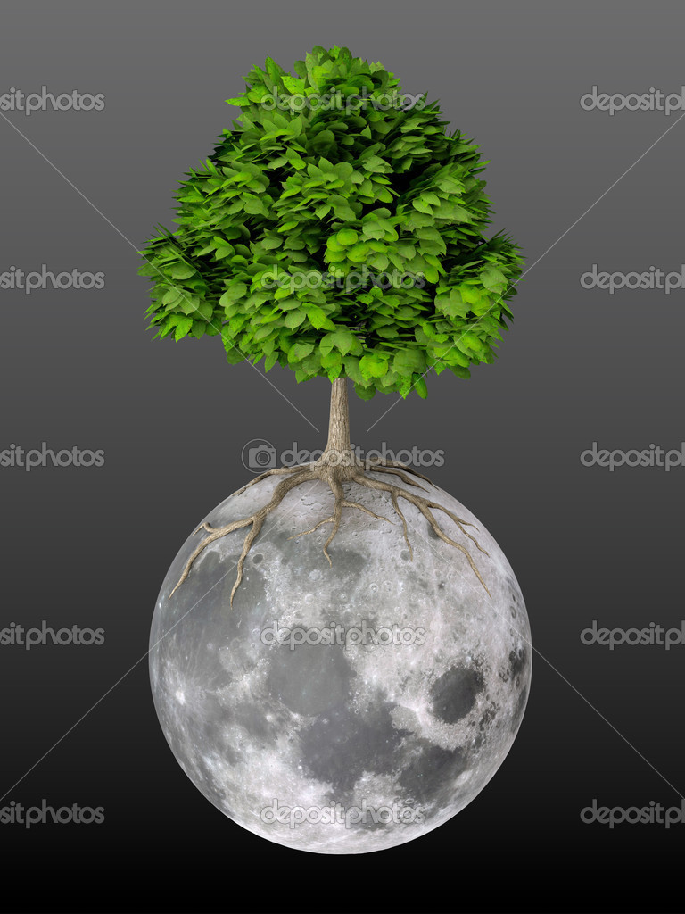 3D render of tree growing on Moon black background  Stock Photo #12566680