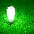 Foto Stock: Energy saving light bulb