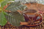 Canela, anís y granos de café — Foto de Stock