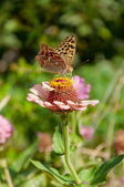 Bright butterfly perched on a pink flower — Stock Photo