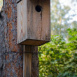 Stock Photo: A closeup of a birdhouse attached to a tree