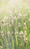 Green sunny grass — Stock Photo