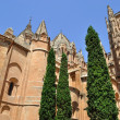 cathedral of salamanca — Stock Photo