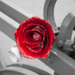 Metal rose — Stock Photo