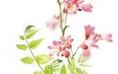 Floral design element — Stock Photo