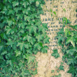 Old headstone in a Graveyard - Photo