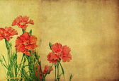 Floral background and design — Stock Photo