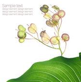 Flora de verano. elementos de diseño encantador — Foto de Stock