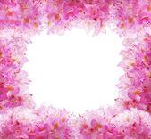 çiçekler beyaz zemin üzerine — Stok fotoğraf