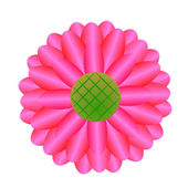 Beautiful pink Gerbera Daisy — Stock Photo