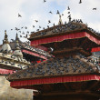 Pigeons over  Patan  — Stock Photo