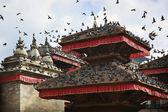 Pigeons over Patan — Stock Photo