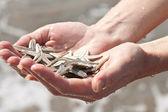 Eller ile starfishes — Stok fotoğraf