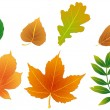Foliage — Stock Vector #12200548