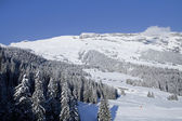 Winter trees in mountains covered with fresh snow. Switzerland, Flims. — Stock Photo