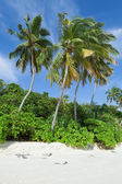 Tropical beach with coconut palms, Maldives Island — Stock Photo