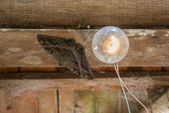 Moth with lightbulb — 图库照片