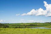 Bucolic landscape — Stock Photo
