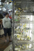 BELO HORIZONTE, BRAZIL - JULY  28: People looking at caged birds — Stock Photo