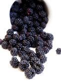 在白色背景上的黑莓 — 图库照片