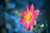 美丽的春天的花朵。软选择性焦点 — 图库照片