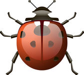 Isolated detailed ladybird — Vecteur