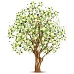 Green spring apple tree — Stock Vector