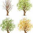 Set of four trees in different seasons — Stock Vector