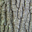 Tree Bark — Stock Photo #12867185