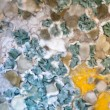 Mould Macro — Stock Photo