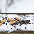 Royalty-Free Stock Photo: Winter Feed